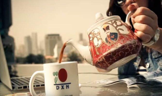 DXN ganodermás MLM cég